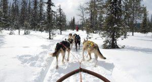 The Work Intensivseminar in Lappland